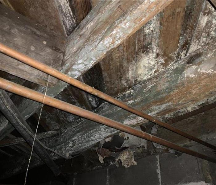 Mold growing on the floor joists in a crawlspace