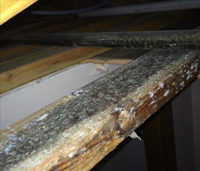 Mold Remediation Is Mold A Problem For Your Wichita Home?