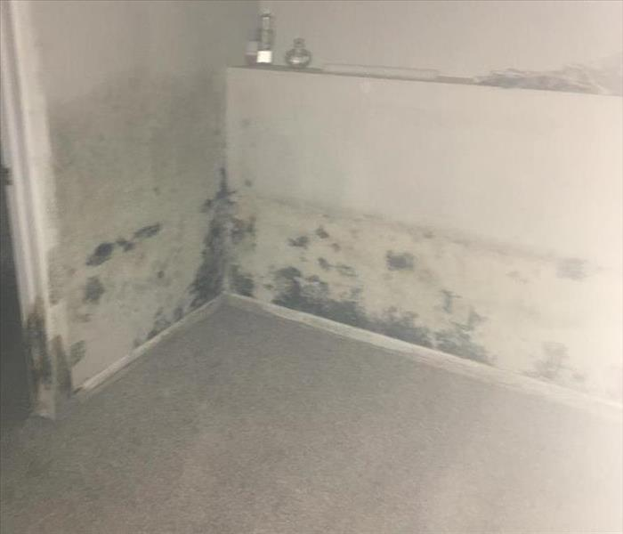 Mold Remediation Does Your Wichita Home Have A Mold Problem?